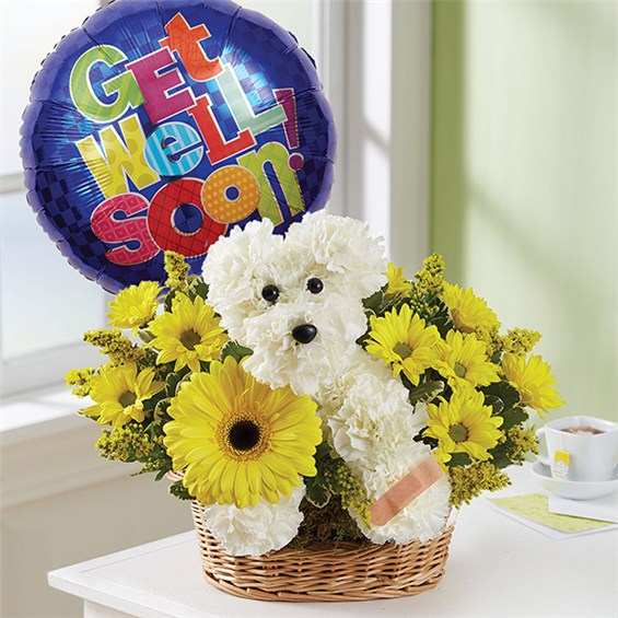 1-800-FLOWERS® SICK AS A DOG™ | Floral Expressions By Celia